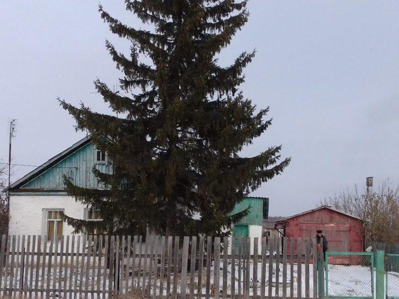 города фото таврический район омская область художник